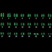 Cytogenetic characterization, rDNA mapping ...