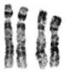 A comparative analysis of the karyotypes ...