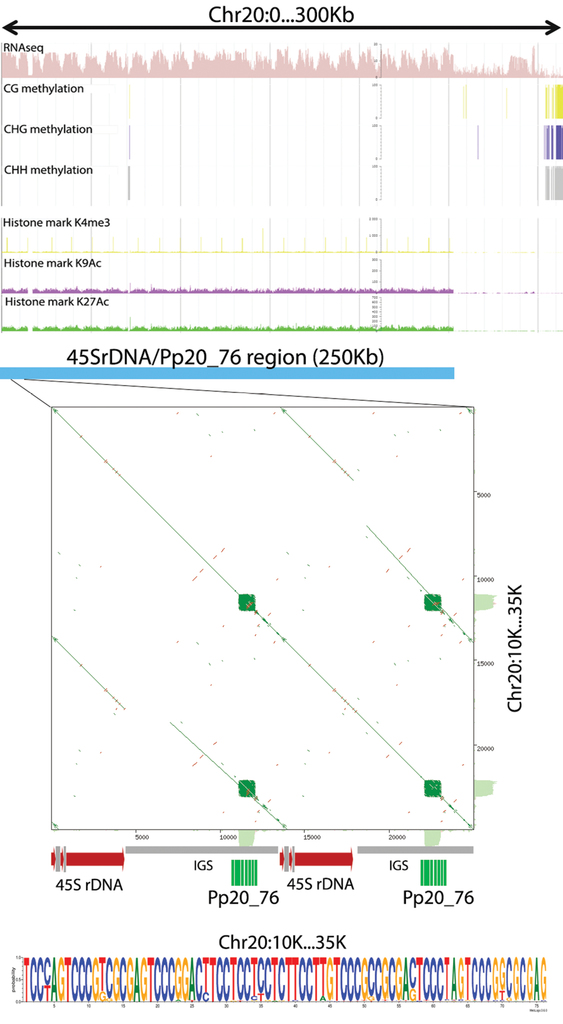 Pilot satellitome analysis of the model plant, Physcomitrella patens