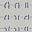 Karyotype characterization and comparison of three hexaploid species of <i>Bromus</i> Linnaeus, 1753 (Poaceae)